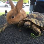 Baby bunny and tortoise at CHECT